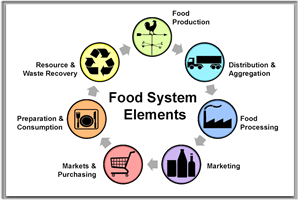 Food System Elements graphic showing steps in the system