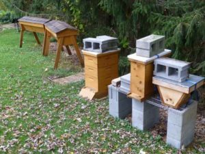 Image of bee hives