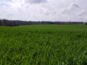Cover photo for Webinar Recording: Wheat Marketing and Weed Control