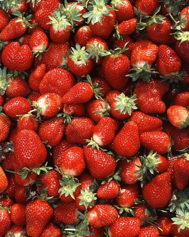 Top view of several dozen fresh strawberries